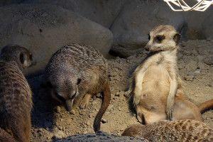 Zoo Oliwa_11