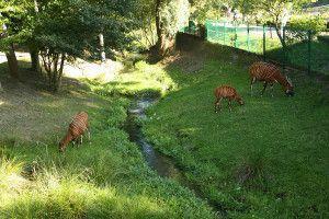 Zoo Oliwa_15