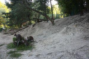 Zoo Oliwa_24