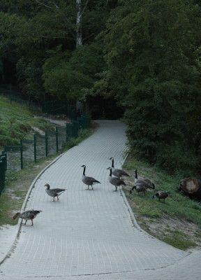 Zoo Oliwa_26