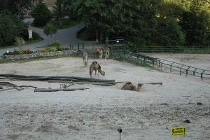 Zoo Oliwa_28