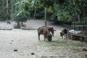 Zoo Oliwa_29