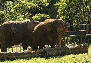 Zoo Oliwa_3