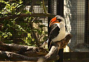 Zoo Oliwa_8