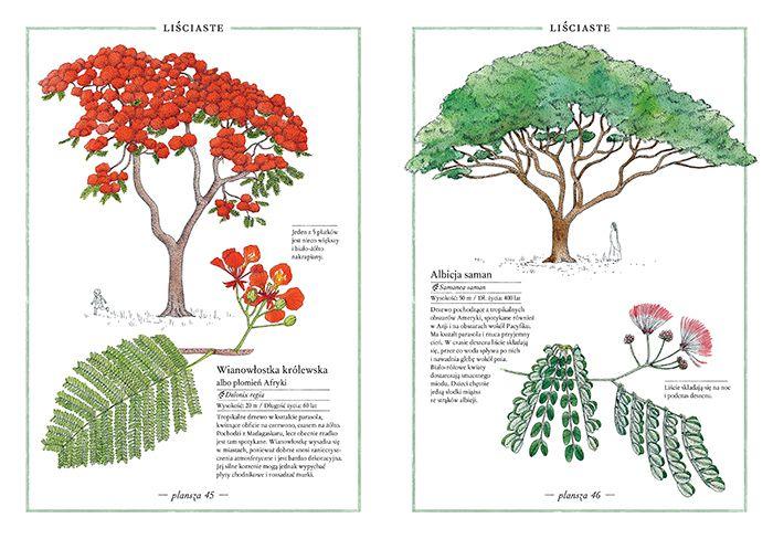 inwentarz-drzew_1_www_700pxrgb