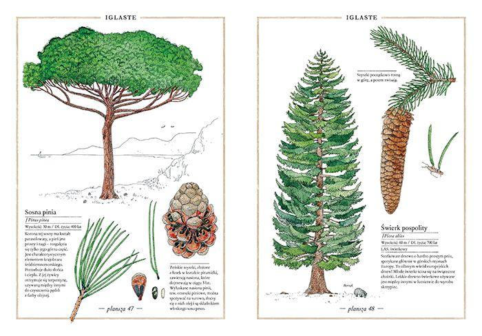 inwentarz-drzew_2_www_700pxrgb